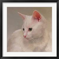 Framed White Kitten