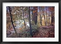 Framed Season of Colors