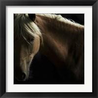 Framed Spirit Horse