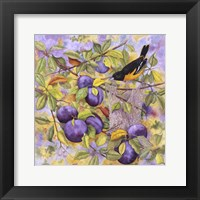 Framed Oriole & Plums