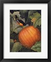 Framed Oriole & Pumpkin