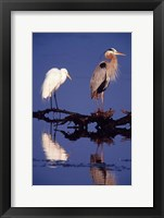 Framed Great Egret and Great Blue Heron on a Log in Morning Light