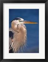 Framed Great Blue Heron, Florida