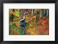 Framed Great Blue Heron in Fall Reflection, Adirondacks, New York