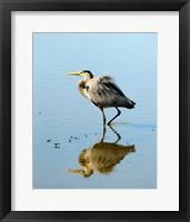 Framed Great Blue Heron in Ridgefield NWR, Ridgefield, Washington