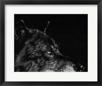 Framed Scratchboard Wolf I