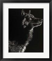 Framed Scratchboard Wolf II