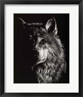 Framed Scratchboard Wolf III
