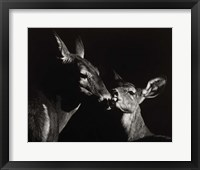 Framed Scratchboard Mother Love #2