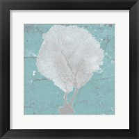 Graphic Sea Fan II Framed Print