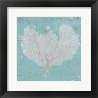 Framed Graphic Sea Fan VI