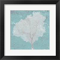 Framed Graphic Sea Fan VII