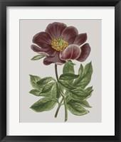 Framed Floral Gems II