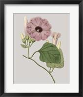 Framed Floral Gems IV