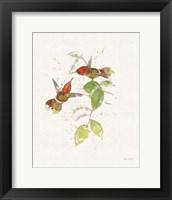 Framed Colorful Hummingbirds II