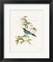 Framed Colorful Hummingbirds IV