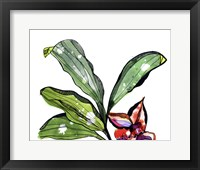 Framed Bee Orchid