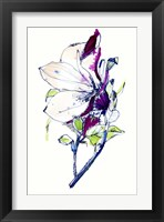 Framed Flower Sketch