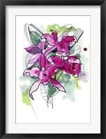 Framed Magenta Orchids