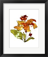 Framed Orange Hibiscus