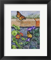 Framed Monarchs, Nasturtiums and Morning Glories
