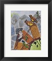 Framed Song Sparrow and Cedar Waxwings