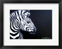 Framed Zebra On Black