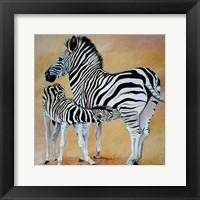 Framed Zebra Bonding