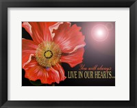 Framed Bereavement Poppy
