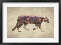 Framed Arizona Mountain Lion