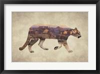 Framed Arizona Mountain Lion