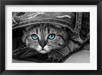 Framed Pop of Color Kitten