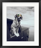 Framed Pop of Color Cool Dog