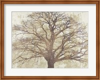 Framed Sacred Oak