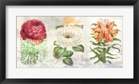 Framed Hortus Botanicus 2.0