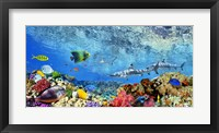 Framed Reef Sharks and fish, Indian Sea