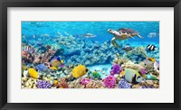Framed Sea Turtle and fish, Maldivian Coral Reef