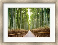 Framed Bamboo Forest, Kyoto, Japan