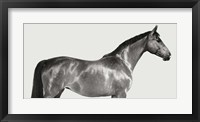 Framed Kingsman Cavalier, English Thoroughbred