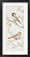 Framed Vintage Birds Panel II