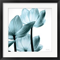 Framed Translucent Tulips III Sq Aqua