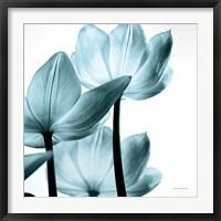 Framed Translucent Tulips III Sq Aqua