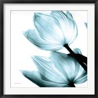 Framed Translucent Tulips II Sq Aqua