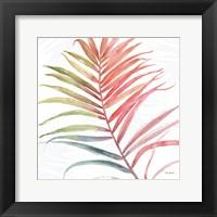 Framed Tropical Blush VI