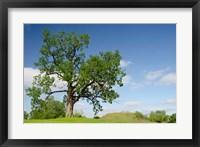 Framed Mississippi, Greenville Winterville Mounds