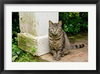 Framed Mississippi, Columbus House cat at Waverley Plantation Mansion