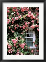 Framed Massachusetts, Nantucket Island, Roses and home
