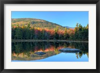 Framed Lily Pond, White Mountain Forest, New Hampshire