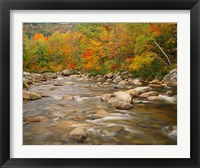Framed River flowing through Forest in Autumn, White Mountains National Forest, New Hampshire