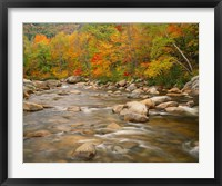 Framed River flowing trough Forest in Autumn, White Mountains National Forest, New Hampshire